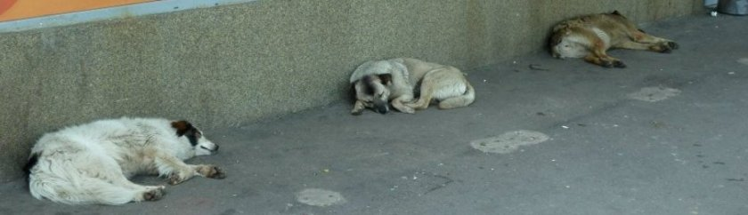 Un trottoir de Bucarest