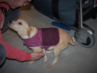 Yasmine - chiens adoptés en 2014