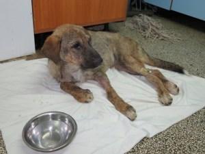 Lola chez le vétérinaire
