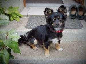 Chance - chiens adoptés en 2014