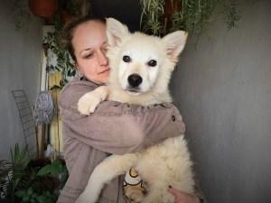 Fizz - chiens adoptés en 2016