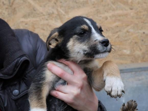 Igor - chiens adoptés en 2016