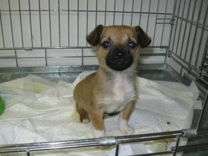 Betty (7) chez le vétérinaire (4 décembre 2012)