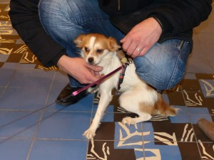 Chiquita - chiens adoptés en 2013