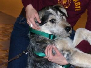 Sparky - chiens adoptés en 2013
