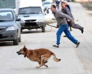 Fourrières de Bucarest Chasse aux chiens (novembre 2013)