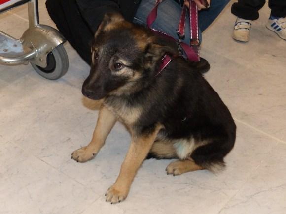 Aby - chiens adoptés en 2014