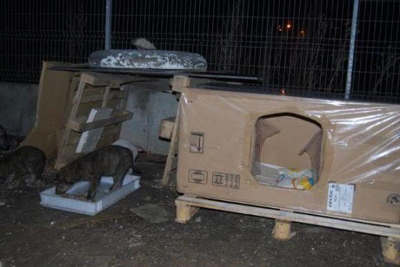 Maison en carton pour une famille de 7 chiens (2009)
