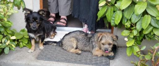 Chance et Milou (21 juillet 2014) - famille d'accueil