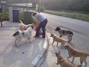La meute de chiens d'Adina (mars 2014)