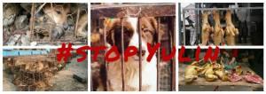 Fondation Brigitte Bardot #StopYulin (14 juin 2016)