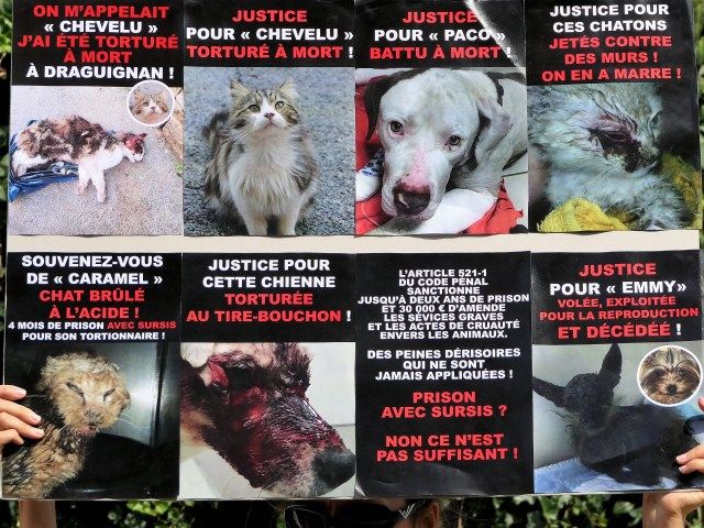 Quelques animaux martyrs ...