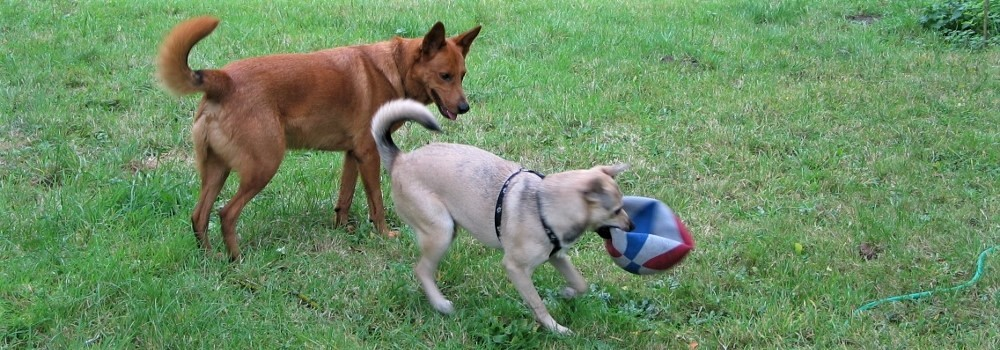 Juju et Molly (25 septembre 2012)