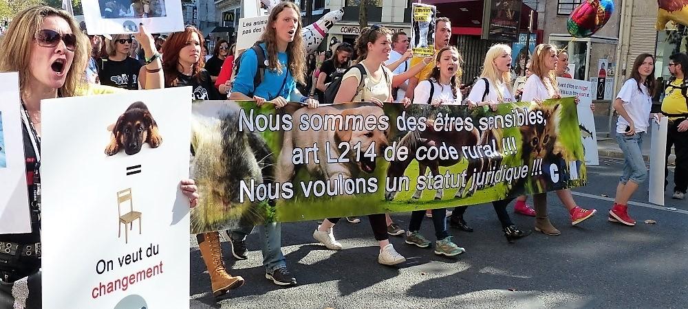 Droits des animaux : pourquoi et lesquels ? - Actions militantes