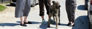 Mustatza - chiens communautaires