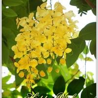 Vishu Wishes and 'Konde' Story