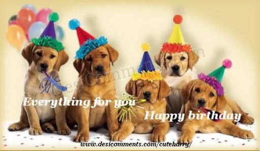 happy birthday cute quotes lol rofl com