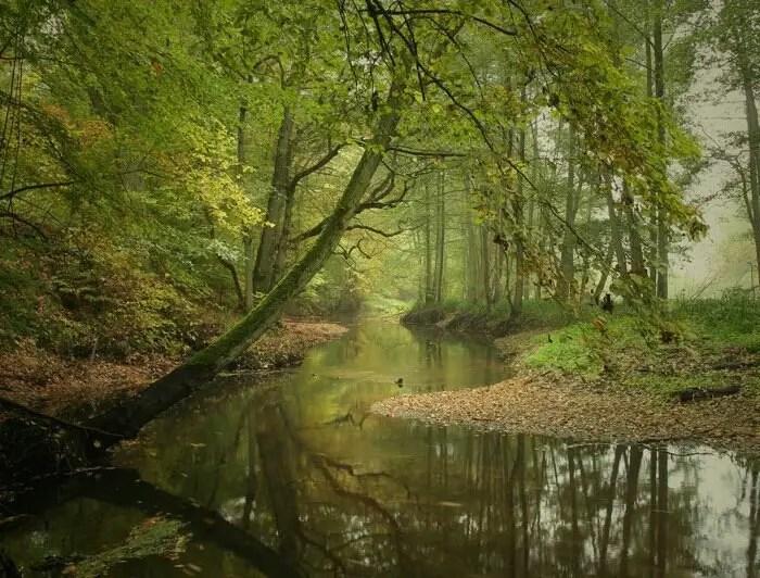 Natural Green View