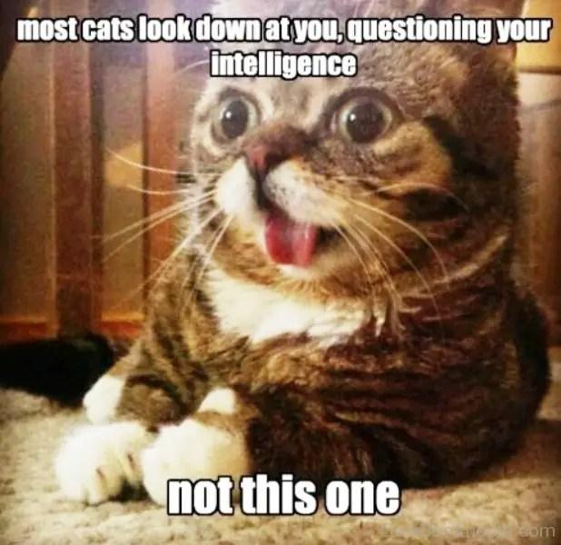 Cat Memes Home Facebook