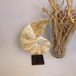 Skulptur Ammonit Perlmutt