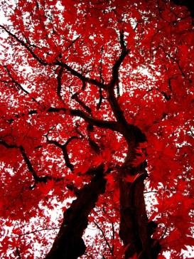Giappone in fragranza di rosso