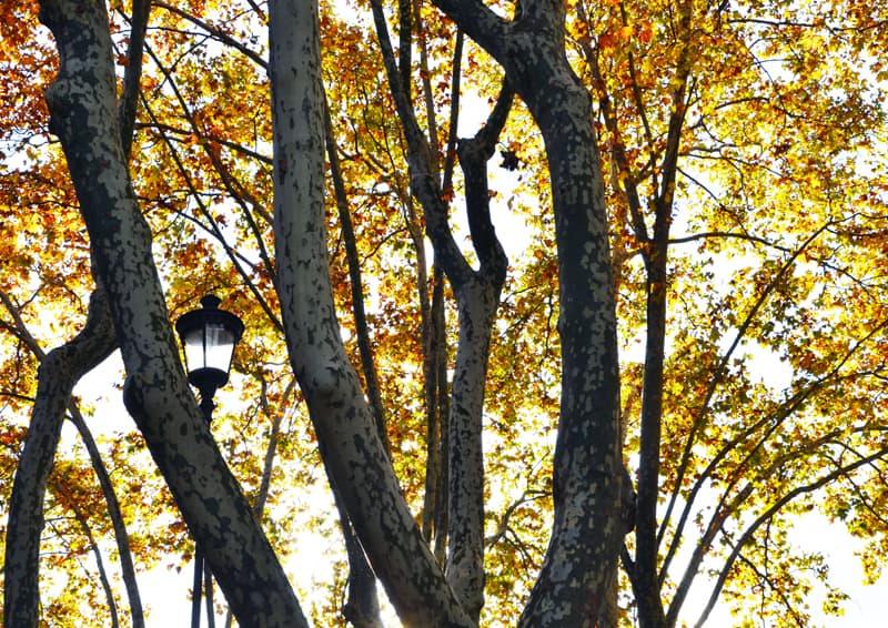 decorare casa | autunno, la mia stagione preferita