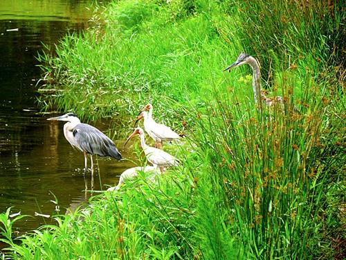 Birds on Pinckney Island Photo by Jeff Gunn - Pinckney Island - Hilton Head Island