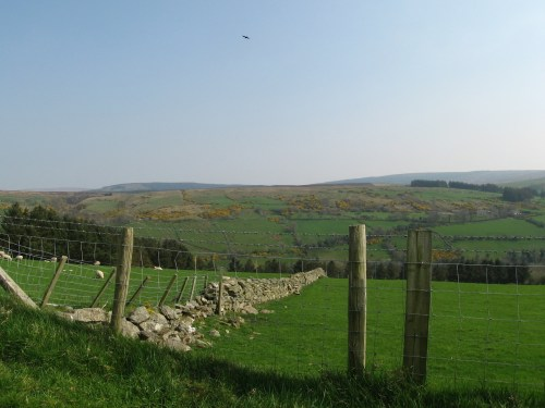Fields in North Ireland