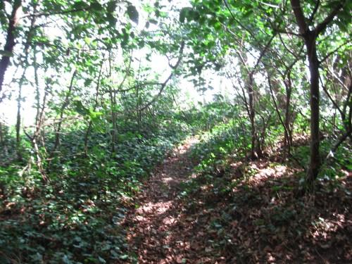 Path to the Leixlip Boathouse Folly