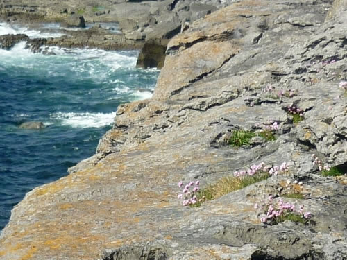 Burren Coast Photo by Christoph Radtke - Plants and Flowers of the Burren - A Different Visit to Ireland