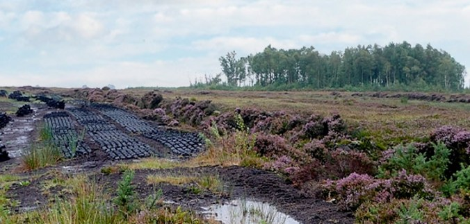 Irish Peatland and Bogs