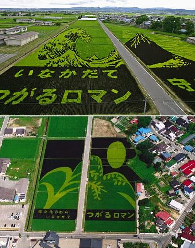 """L'image """"https://i2.wp.com/www.designboom.com/weblog/images/rice_big.jpg"""" ne peut être affichée car elle contient des erreurs."""