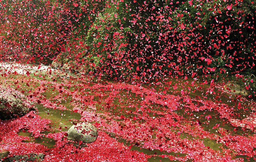 nick-meek-photographs-flower-petals-in-HD-designboom-08