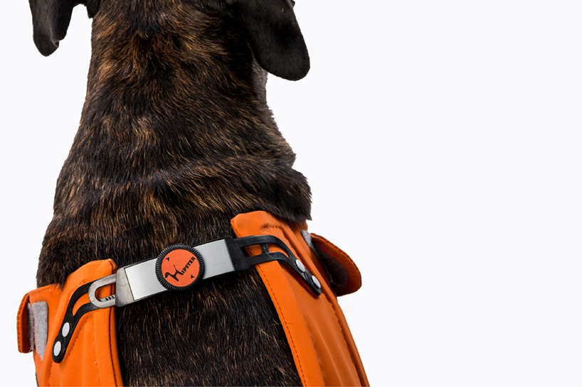 Galia Weiss S Hipster Harness Rehabilitates Dogs With Hip