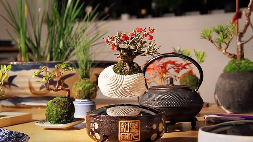 Japanese Floating Bonsai