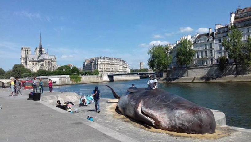 船長boomer集體鯨巴黎安裝設計