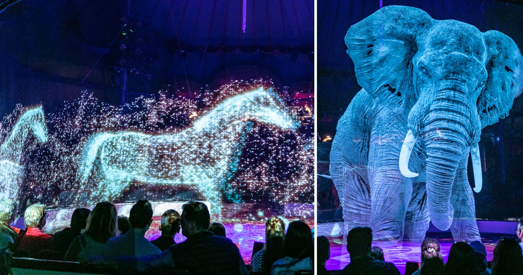 Could This Animal Free Holographic Experience Be The