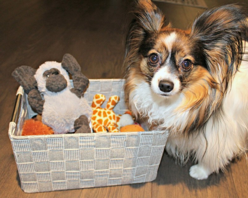 Organize you pantry. Use dollar store containers for pantry organization. #sagethepapillon