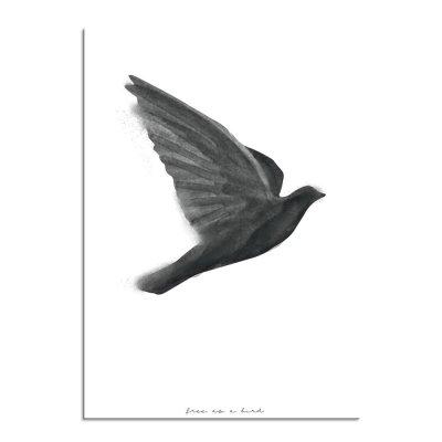 Bird-1d
