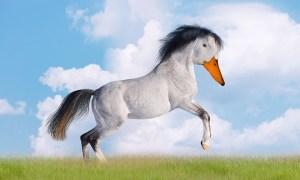 duck-horse-1687704_960_720