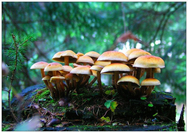 25 Cool Mushroom Pictures Designdune