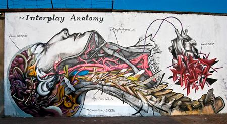 interplay anatomy