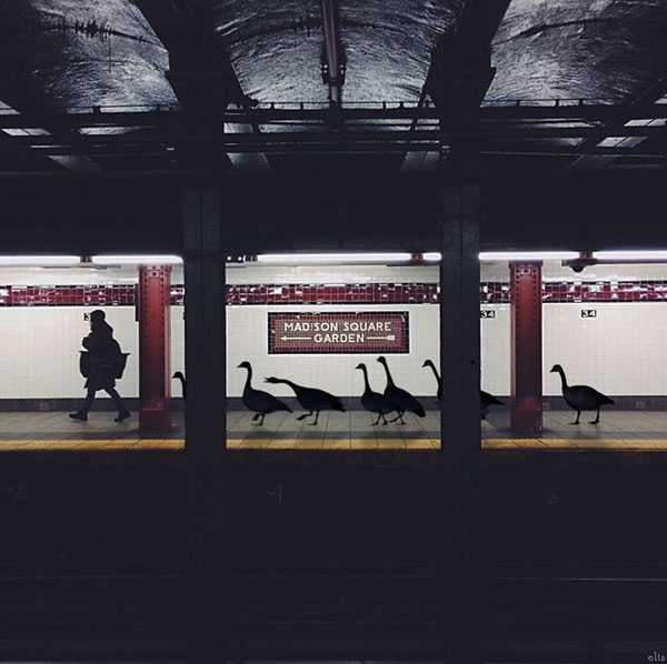 Subway-geese__880