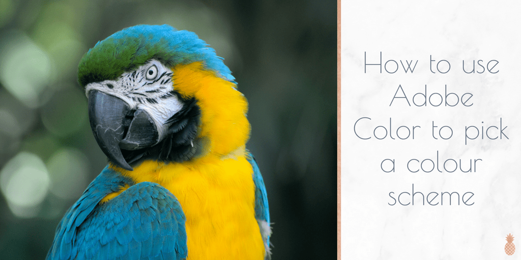 How to use Adobe Color to pick a colour scheme for your website