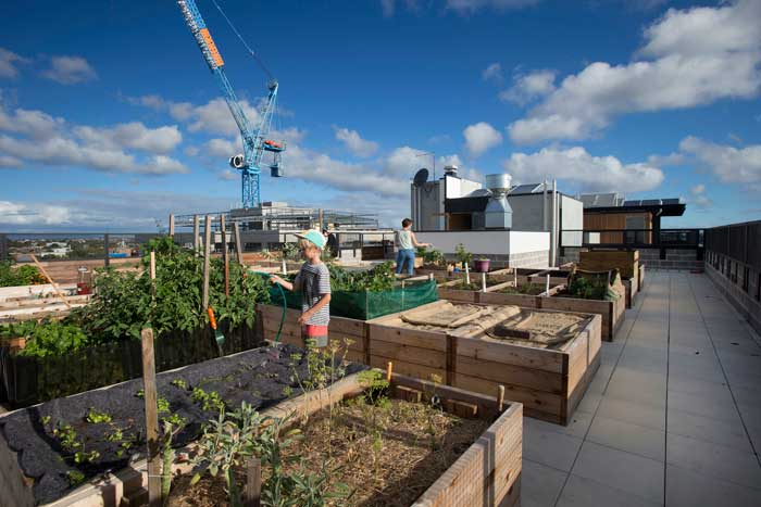 Rooftop garden at The Commons