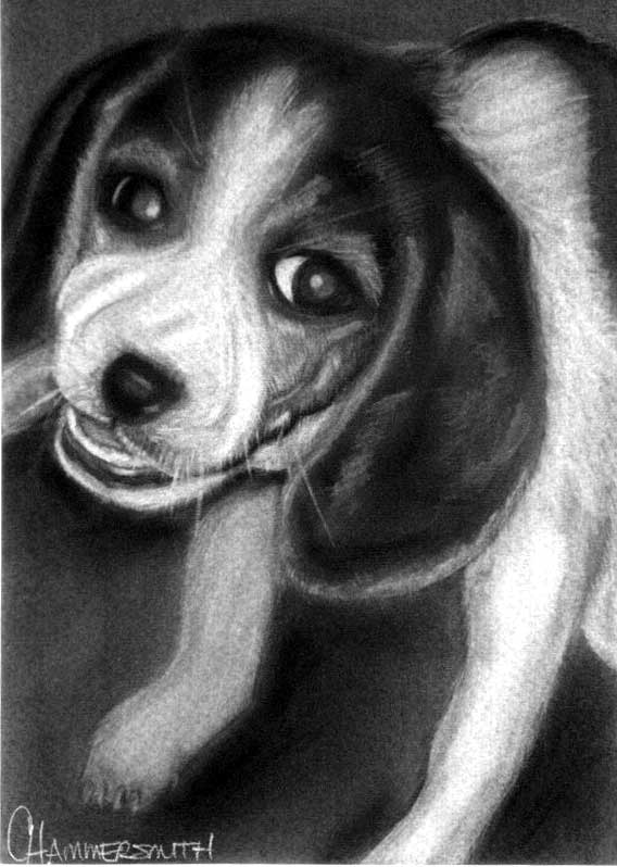 Charcoal drawing of baby Abby the day I brought her home, chewing on a box flap