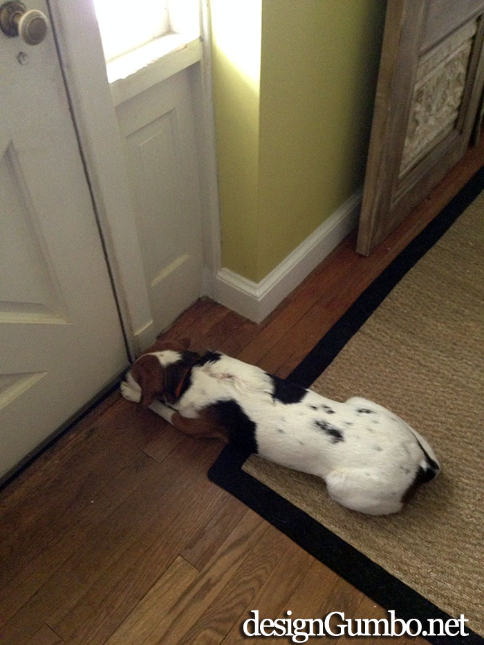 This is what it looks like when Lexi is away, I wait at the front door for her return. I'm a lonely beagle.