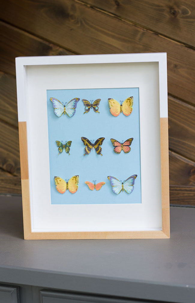 DIY Butterfly Specimen Art Frame