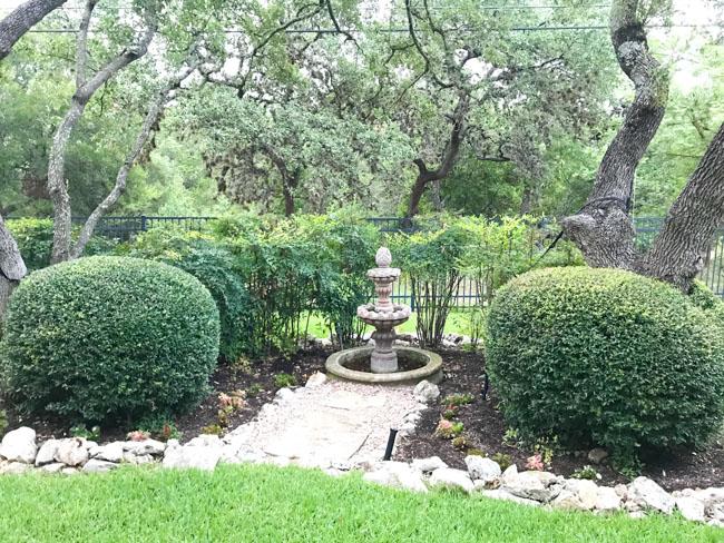 Invasive nandina in Texas garden