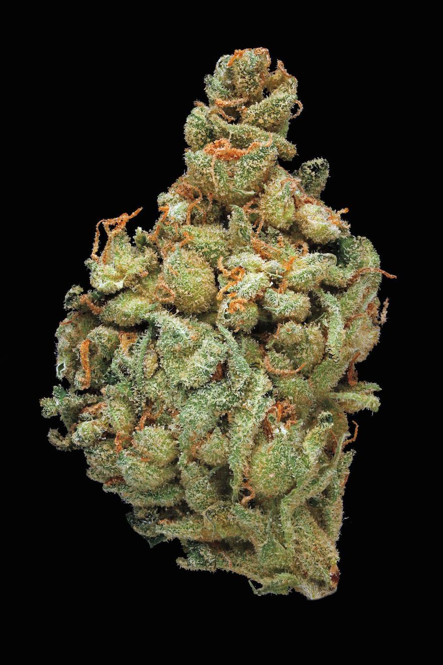 Chronicle Releases Scientific Guide To Marijuana Design